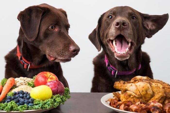 Dieta sana, animale felice!